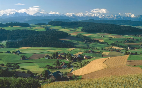 Wide-open green and golden fields stretching as far as the eye can see: the scenic agricultural landscape of Emmental, in the heart of the Bernese Mittelland.