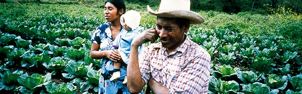 Smallholder farming family in a cabbage field in Honduras