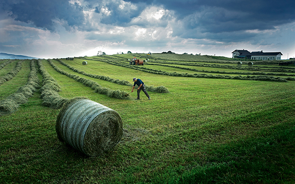 Hay-making in a field