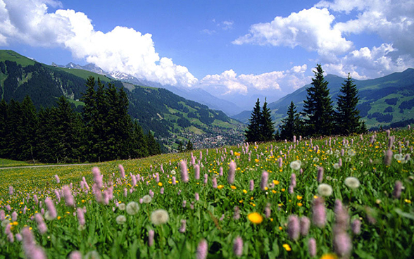 View over the valley near Adelboden