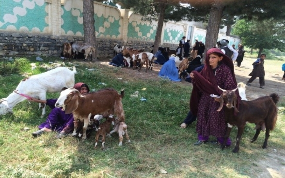 Women-headed households receive two goats