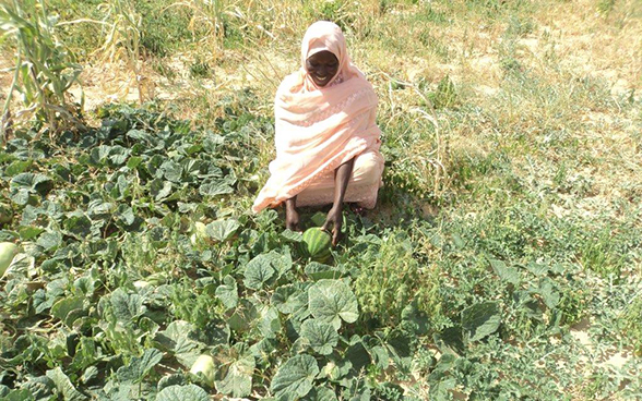 A woman picking vegetables in Biltine in Chad's Sahel region.
