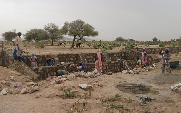 Women helping to build weirs in the Chadian Sahel.