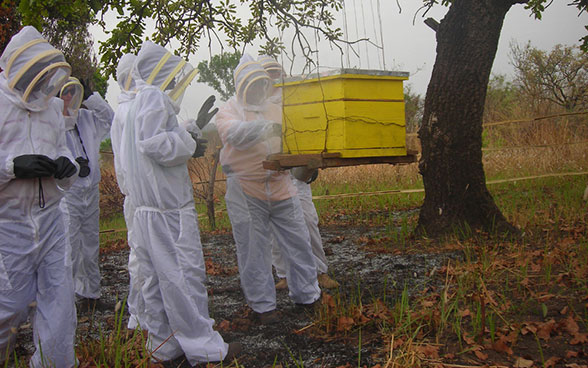 Beekeepers standing around a beehive that is hanging from a tree.