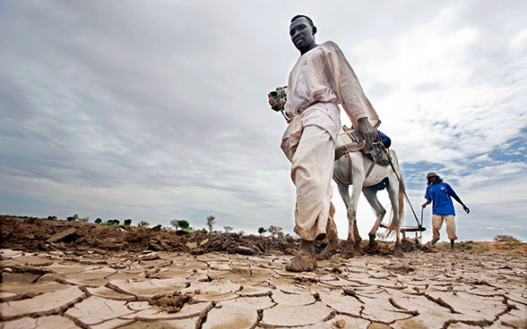 Two farmers in Darfur ploughing a parched field.