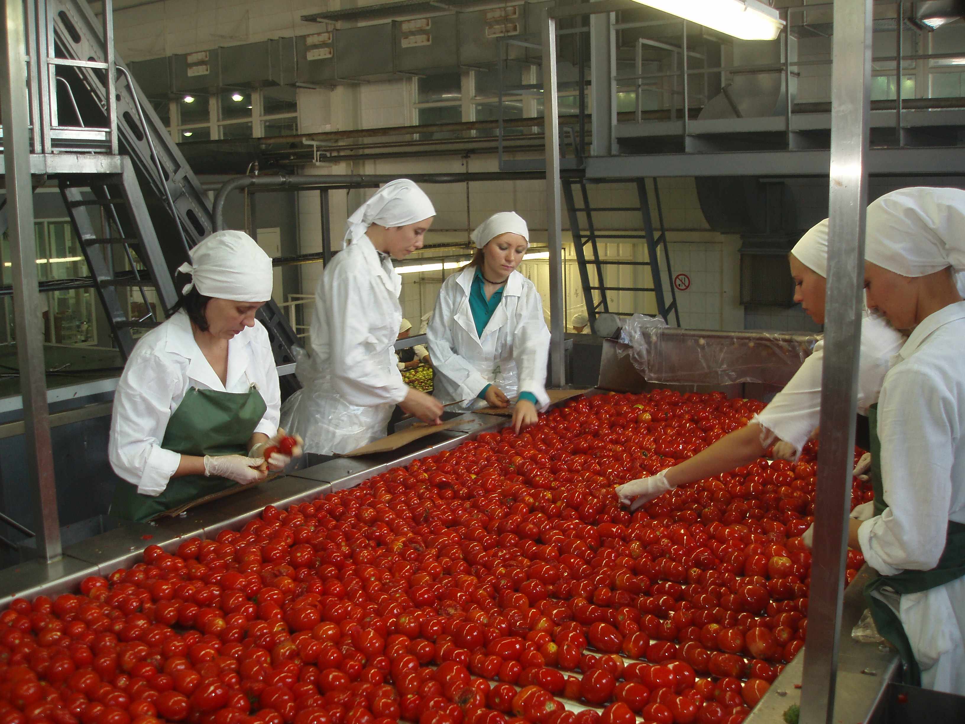 Women sorting tomatoes on a conveyor belt at an agricultural processing plant.