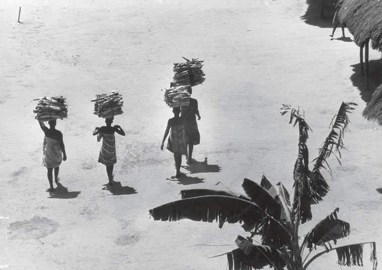 Four women carrying firewood on their heads walk past palm trees and huts